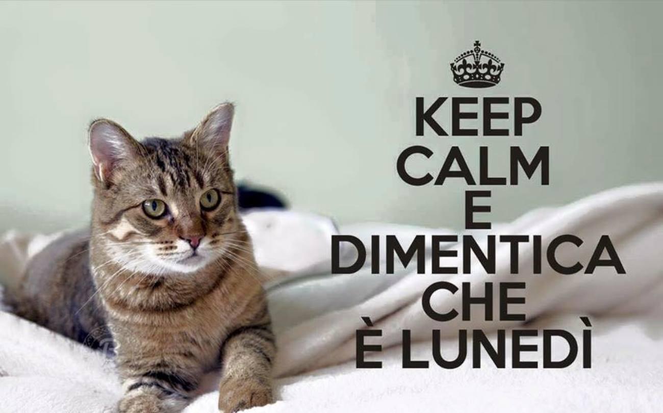 Buon Lunedì Con Animali Dolci Buongiornoate It