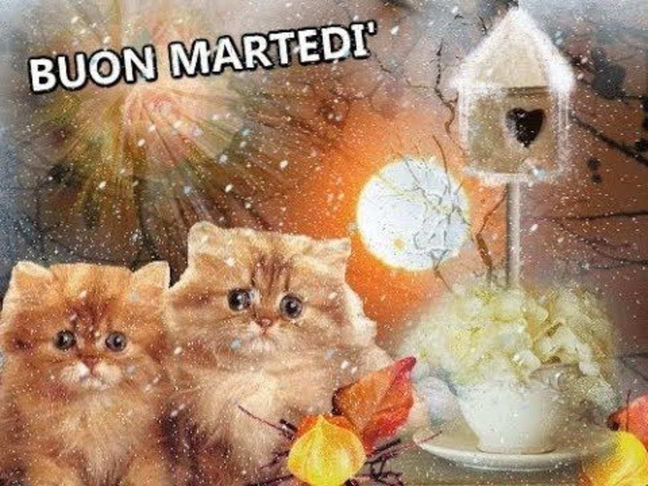 Buon Martedì Con Gatti Buongiornoateit