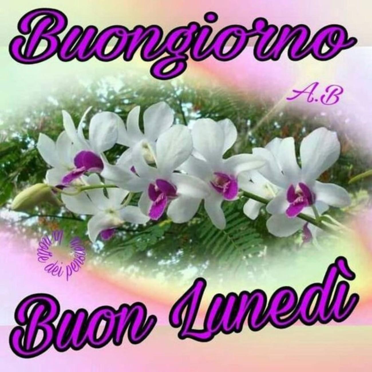 Buongiorno E Buon Lunedì Con I Fiori Buongiornoate It