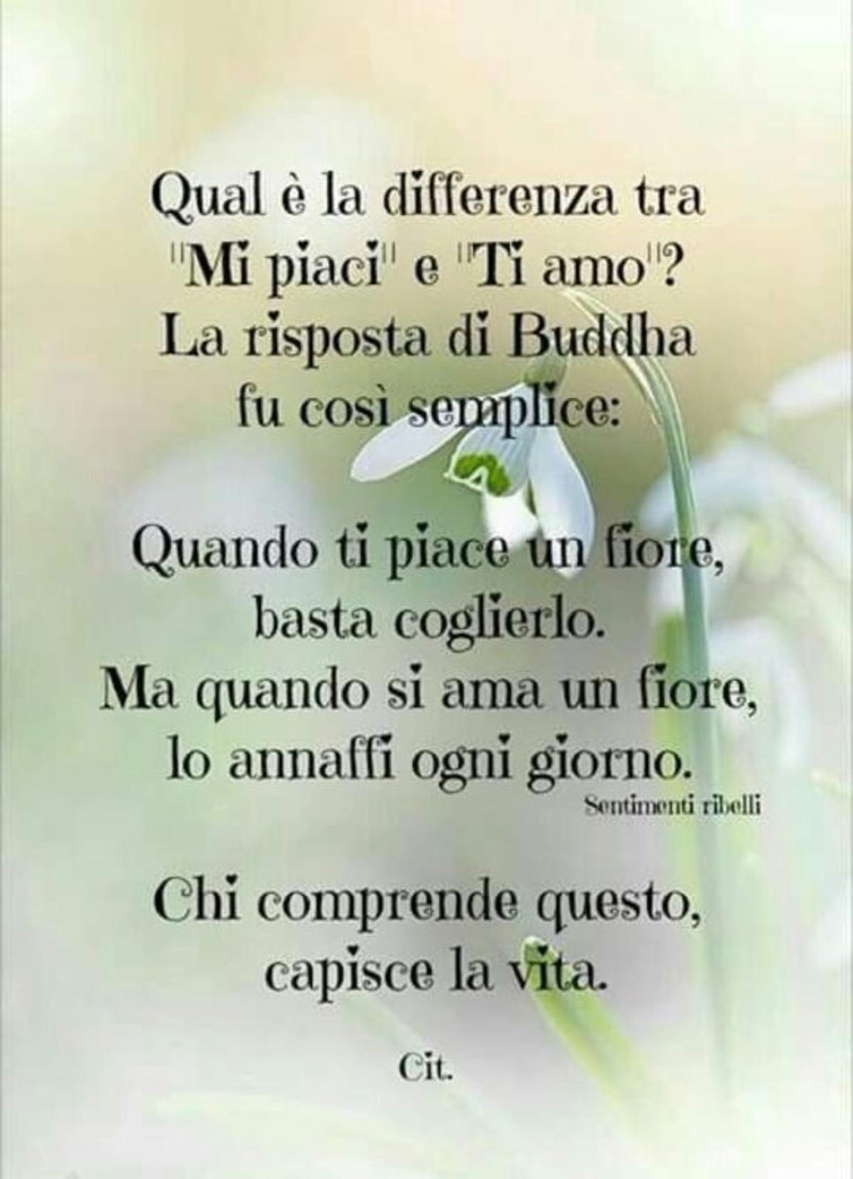 Citazioni belle di Buddha - BuongiornoATeit