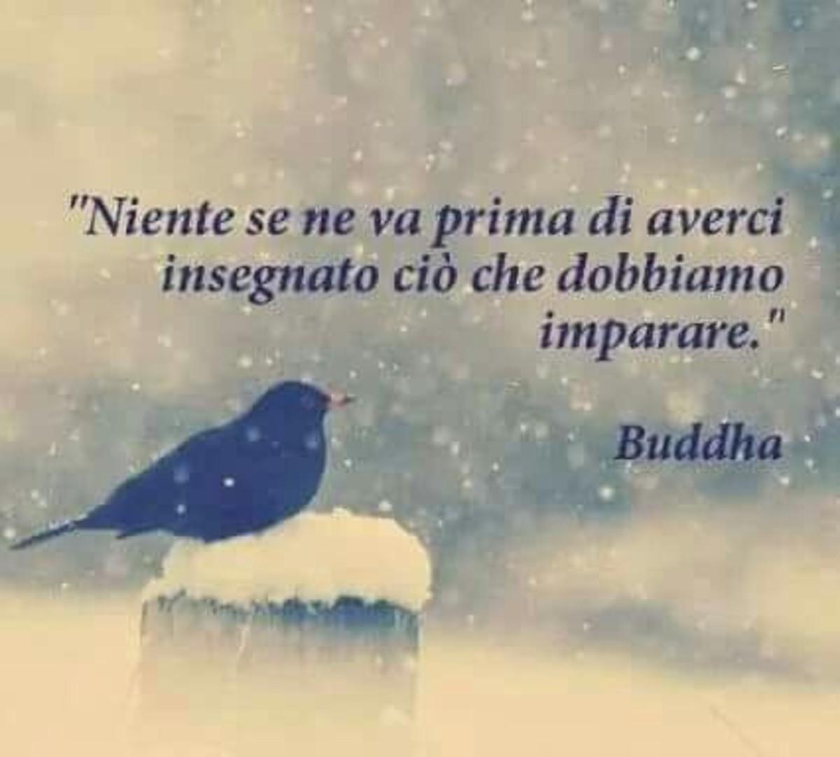 Citazioni Di Buddha Buongiornoate It